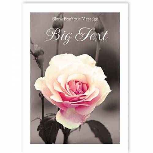 Rose Blank Message Card