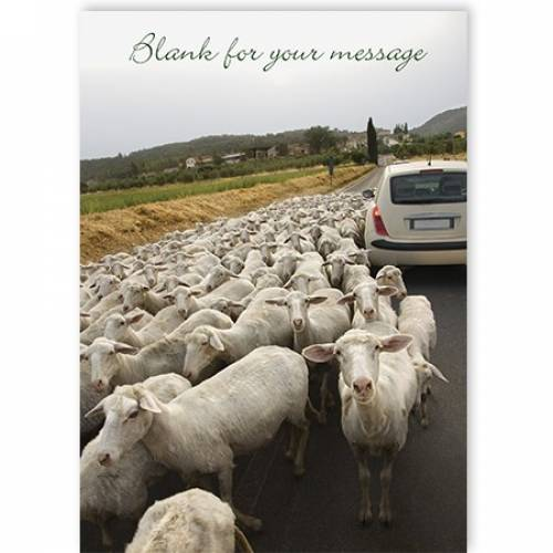 Sheep Rural Scene Any Message Any Occasion Card