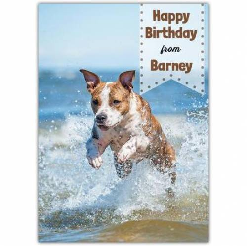 Happy Birthday Pet Card